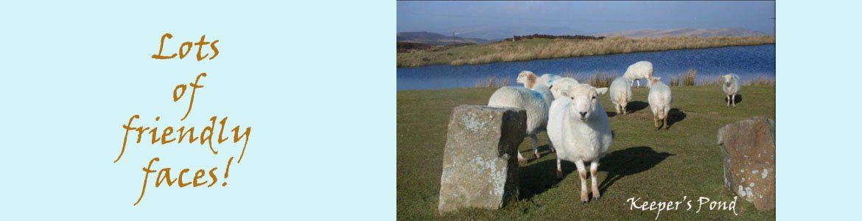 Sheep at Keeper's Pond