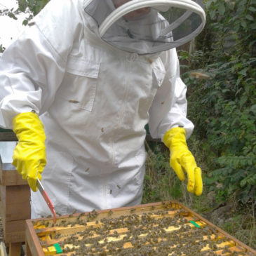Bees Update – No Honey Expected This Year!
