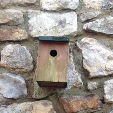NNBW – National Nest Box Week