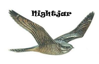 Nightjar - Oakfield B&B